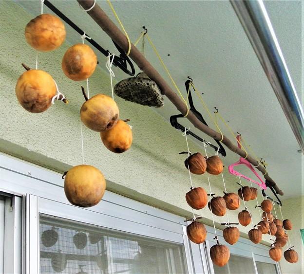今年もやっぱり干し柿作るよね!