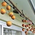 Photos: 今年もやっぱり干し柿作るよね!