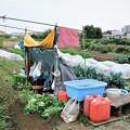 Photos: 新菜園全景