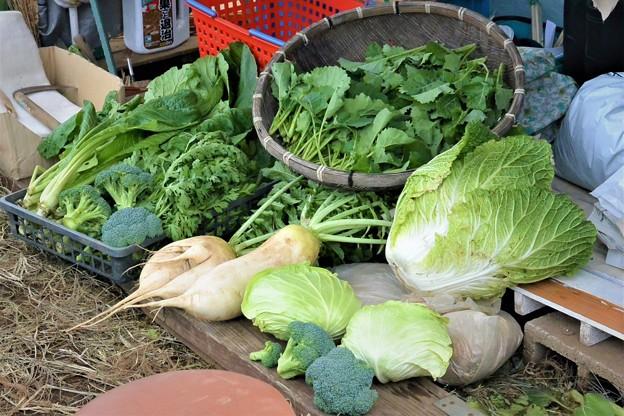 11月6日・収穫も徐々に冬野菜へと・・.