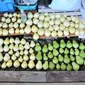 11月15日ハヤトウリ収穫(家内採り分)