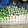 11月15日ハヤトウリ収穫(後に黒鯛ちゃん採り分)