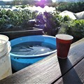 氷の張った菜園でコーヒを・・