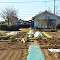 Photos: 菜園・道具小屋撤去完了