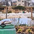 Photos: 新菜園・道具小屋撤去完了.