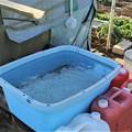 Photos: 雨の後・あふれる水桶を見る(ニンマリ・・)