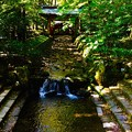 Photos: 彌彦神社 木漏れ日