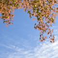 写真: 秋空と紅葉