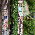 東京の電柱