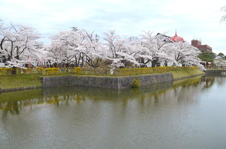 180414桜03