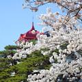 Photos: 200411桜17