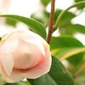 写真: 今、花を咲かせます