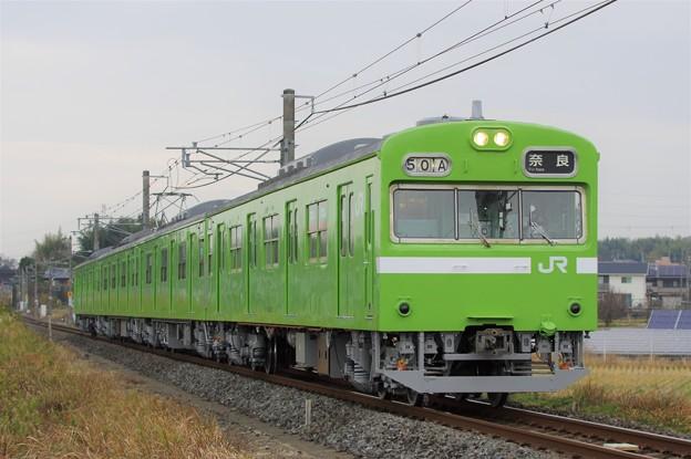 IMGP5521