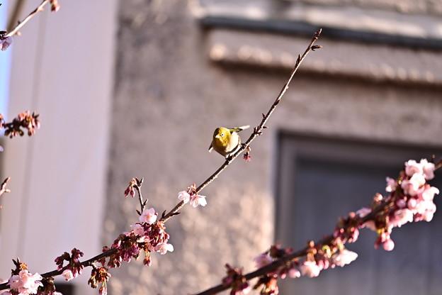Photos: DSC_6710