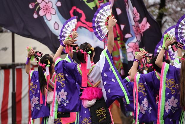 熊谷桜よさこい2017 dance company REIKA組1