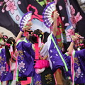 写真: 熊谷桜よさこい2017 dance company REIKA組1