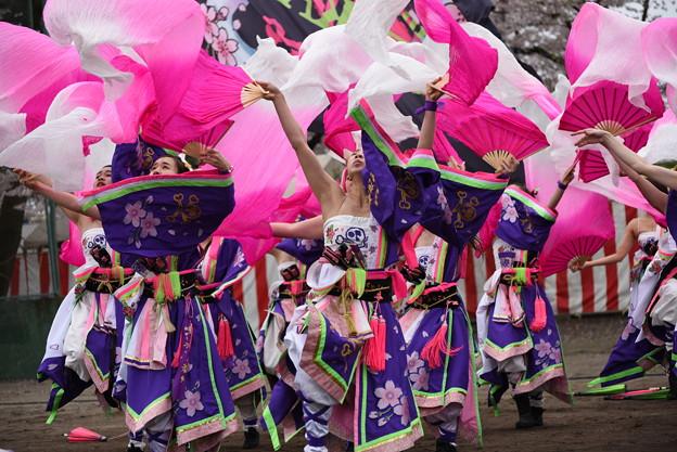 熊谷桜よさこい2017 dance company REIKA組3