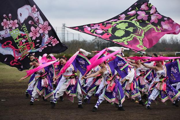 熊谷桜よさこい2017 dance company REIKA組8