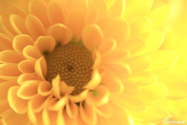 太陽のような花