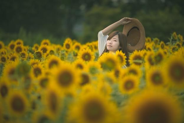 思い出の向日葵