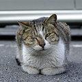 島の猫と地域猫。