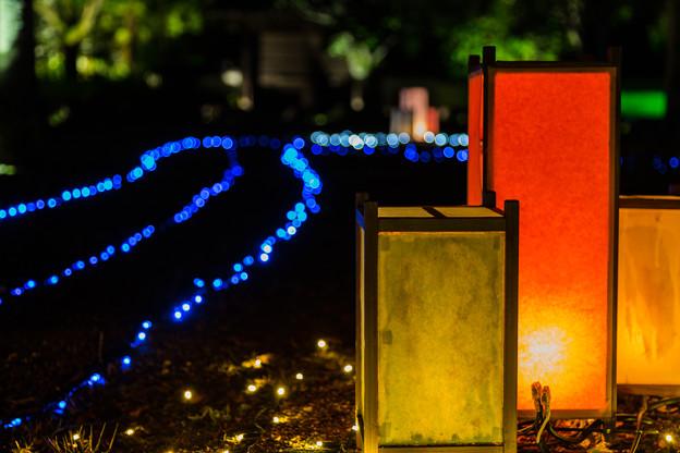 夏の幻想庭園 夏の烏城灯源郷