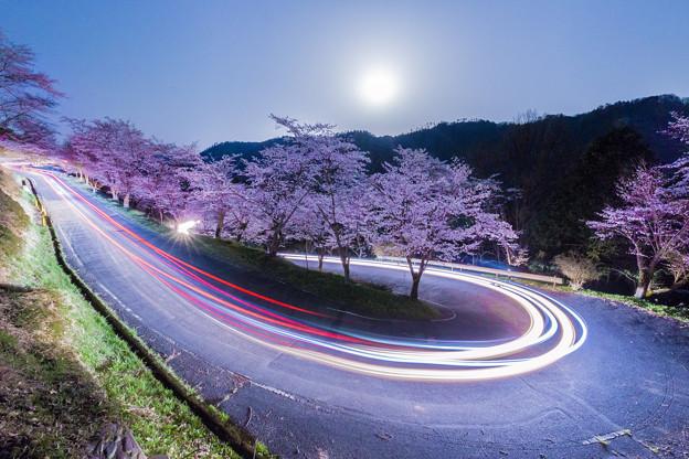 桜レーザー