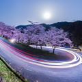 写真: 桜レーザー