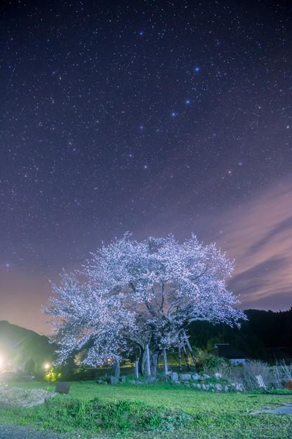 2018 尾所の桜