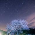 写真: 2018 尾所の桜