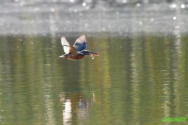 大漁飛行1