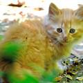 写真: 子猫の顔は