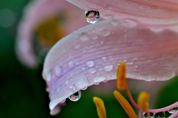 写真: 雨の日は