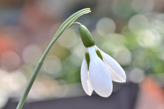 Photos: 春の使者