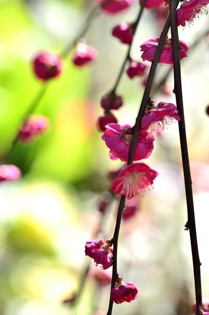 写真: 春は名のみの...