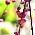 Photos: 春は名のみの...