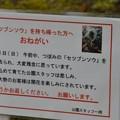 Photos: ニコマーク後曇り