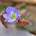 写真: 似てる花
