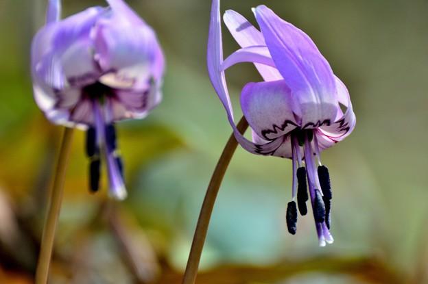 写真: 春の光と妖精