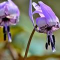 Photos: 春の光と妖精