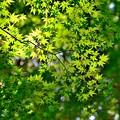 Photos: 緑のグラデーション