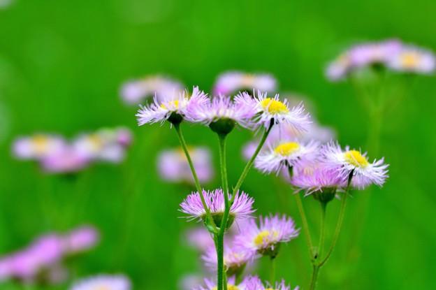 元気な花弁