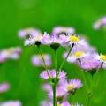 写真: 元気な花弁
