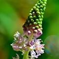 写真: 咲き始めは目立たずに