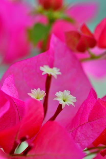 写真: 三つのお花