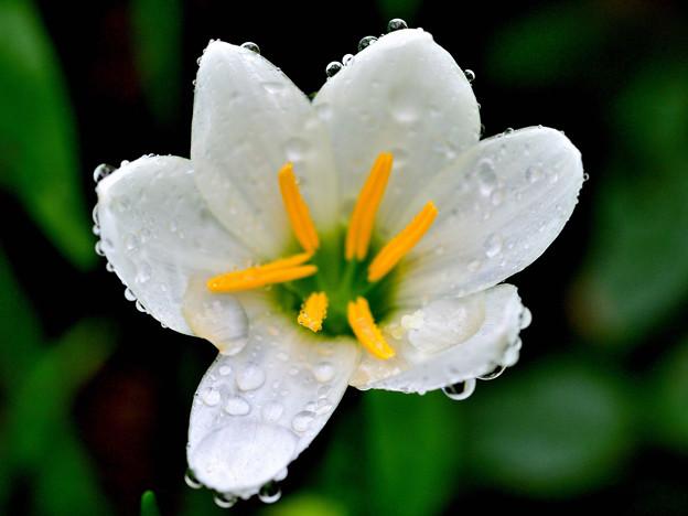 写真: 雨近く...
