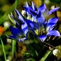 写真: 秋のブルーは