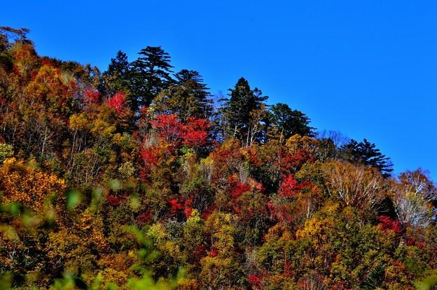 Photos: 青空と紅葉と