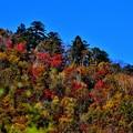 写真: 青空と紅葉と