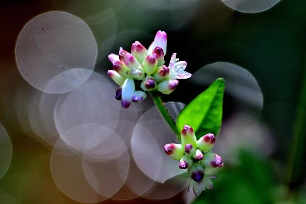 花が閉じる時